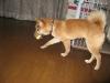 Koko20061220_016
