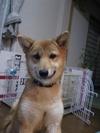 Koko20061229_3