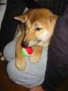 Newdog20061008_4